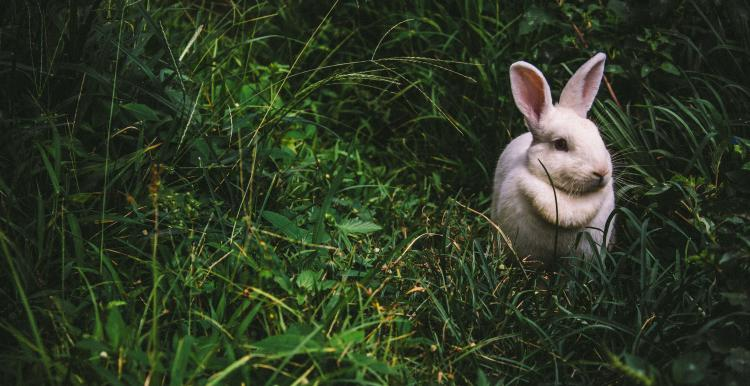 Rabbit by Victor Larracuente